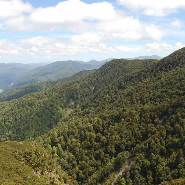 Wairarapa Manuka Wälder in Neuseeland